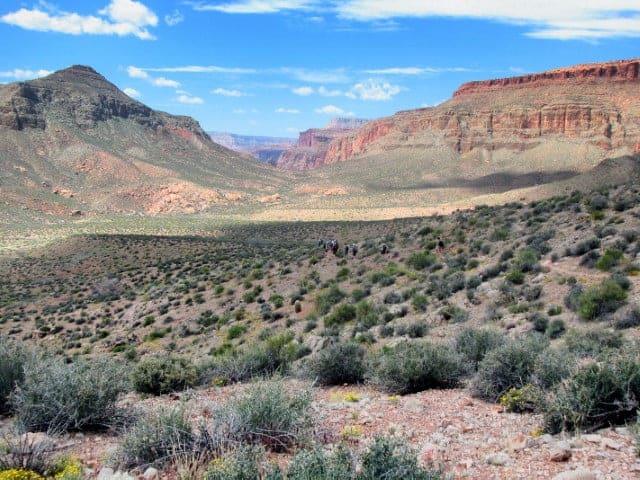 California Condors Soar Above Grand Canyon Rafters