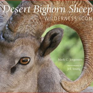 Desert Bighorn Sheep: Wilderness Icon